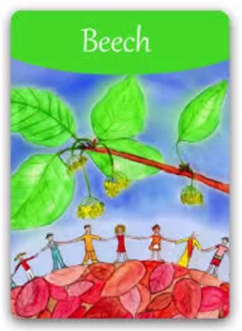 Flor de Bach Beech Sumersalud 1