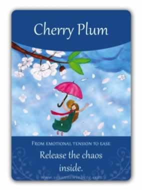 Flor de Bach Cherry Plum Sumersalud 1